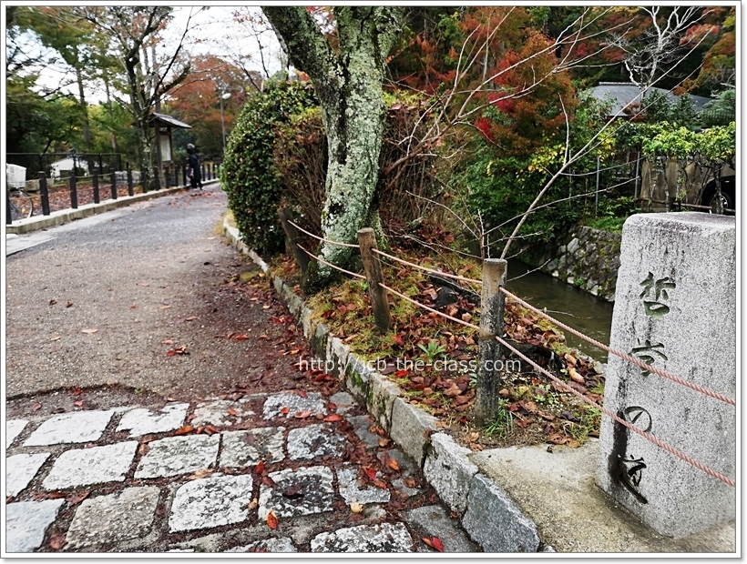 京都 哲学の道 紅葉